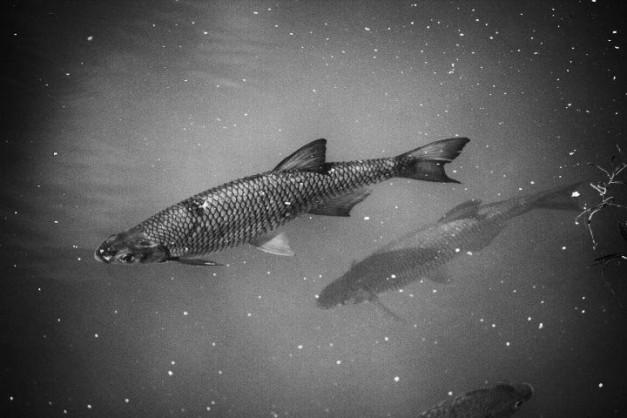 Photo Fish Bomb