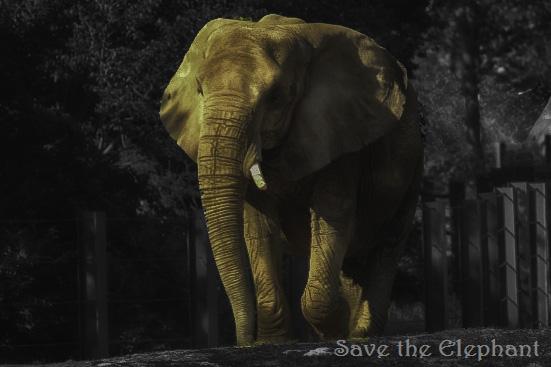 saveelephant
