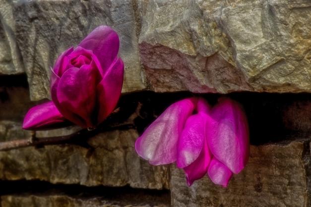 20150329-IMG_0390-Edit-Edit