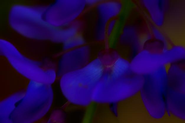 20150426-IMG_0766-Edit-Edit-Edit