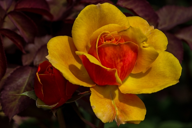 20150531-IMG_0405-Edit