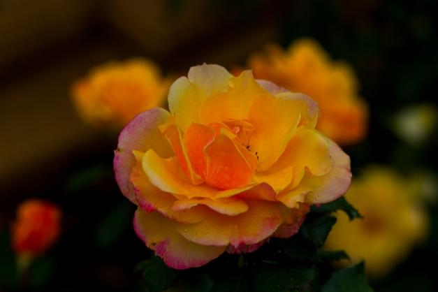 20150524-IMG_0015-Edit