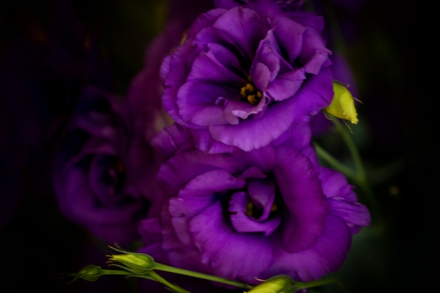 20150628-IMG_0593-Edit-2